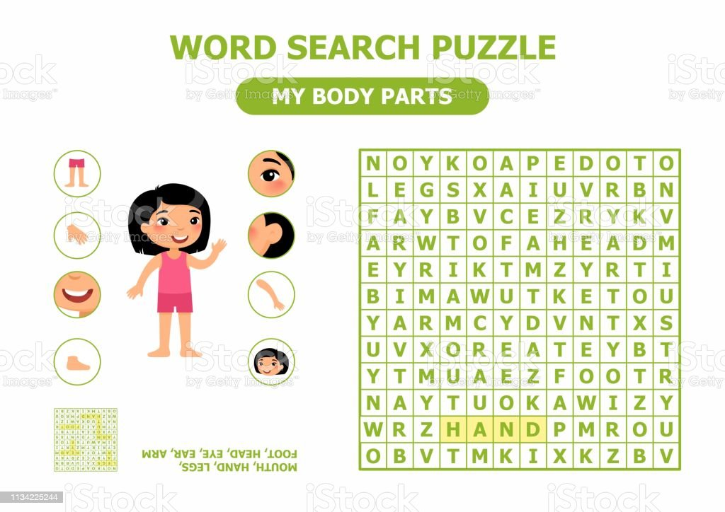 Word Search Puzzle My Body Parts Anatomy For Children Stock Illustration -  Download Image Now