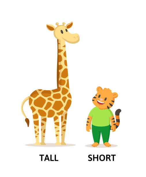 Tall And Short Illustrations, Royalty-Free Vector Graphics ...