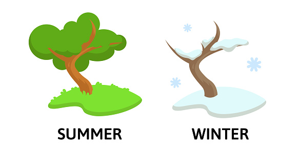 Words winter and summer flashcard with cartoon tree in different seasons. Opposite nouns explanation card. Flat vector illustration, isolated on white background.