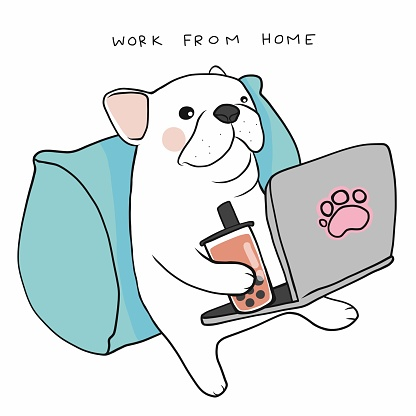 Work from home French bulldog use laptop and drink ice bubble milk tea cartoon vector illustration