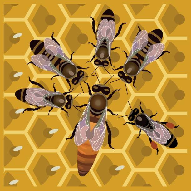 Worker bees with the queen bee Worker bees with the queen bee on honeycomb queen bee stock illustrations