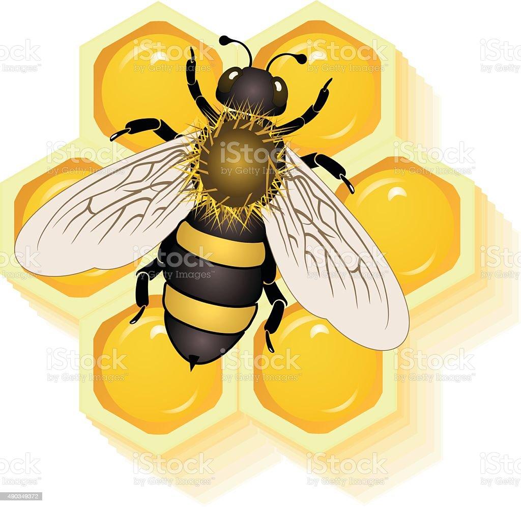working bee on honey cells