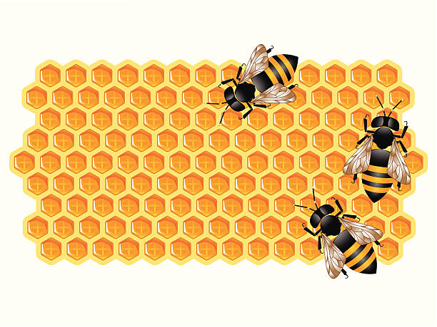 Working Bees and Honeycomb  bee clipart stock illustrations