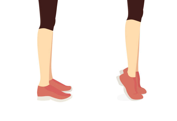 Workout diagram about Calves reduction with Tip Toe exercise. vector art illustration