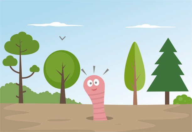 Worm in a hole worm annelid stock illustrations
