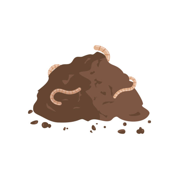 Worms in Compost Worms in compost. Earthworms on a pile of ground. Vector illustration flat design annelid stock illustrations