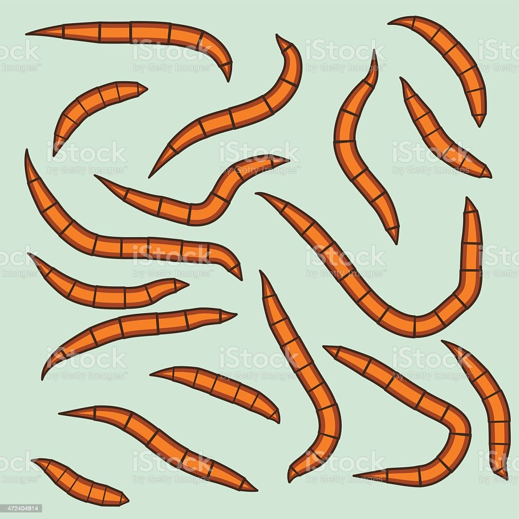 Worms vector art illustration