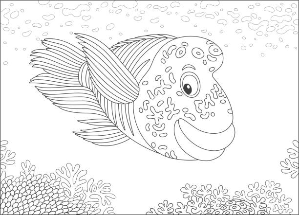 Royalty Free Wrasse Clip Art, Vector Images