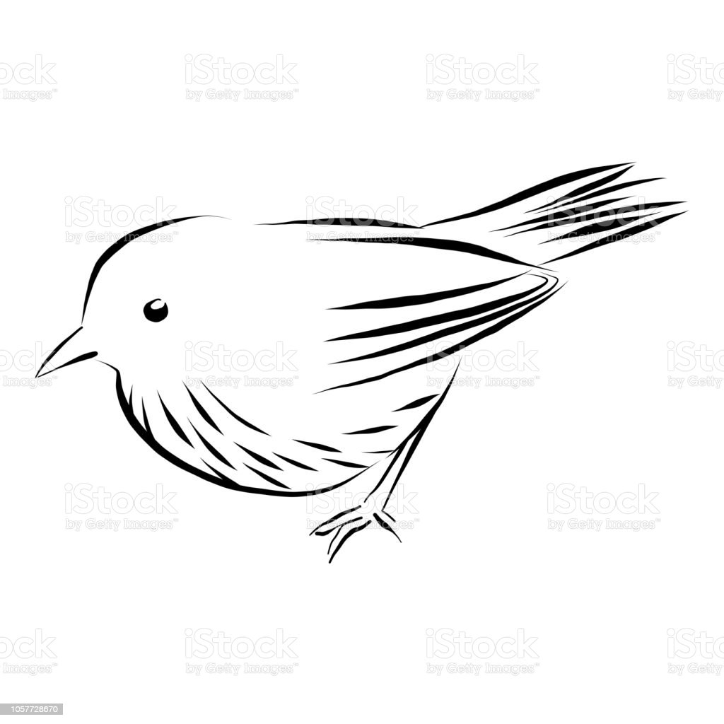 レンペンとインクの白で隔離の雀ベクトル図 イラストレーションの