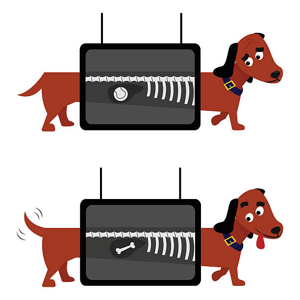bildbanksillustrationer, clip art samt tecknat material och ikoner med x-ray dog examination vector illustration. animal health veterinary medicine. - veterinär, undersökning