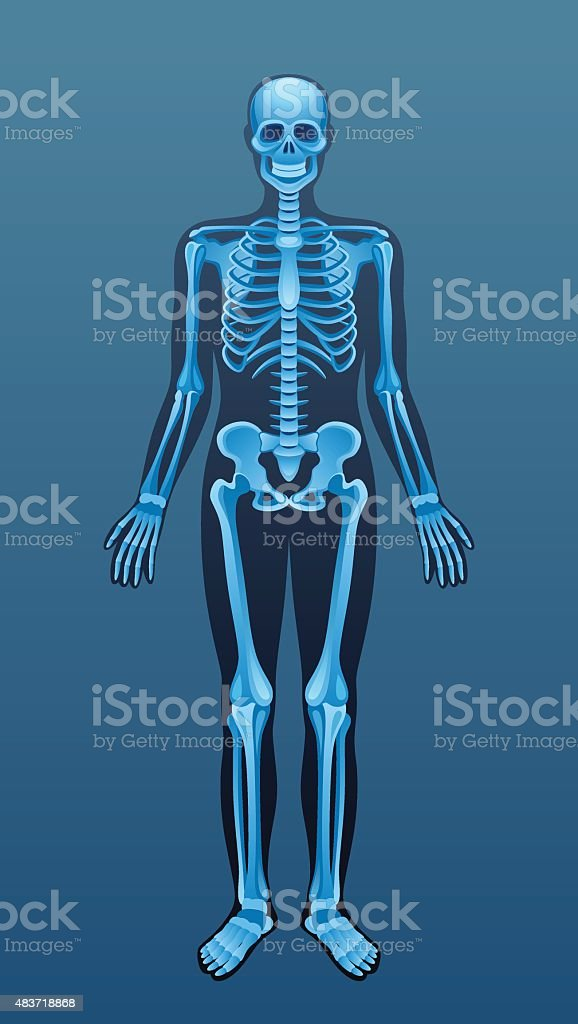 X-ray human skeleton vector art illustration