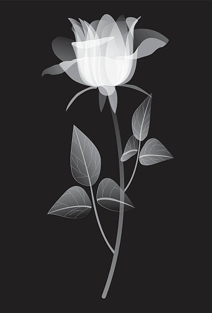 X Ray Of Rose Watercolor Amazing Tattoo For Me Yeti: Royalty Free X Ray Rose Clip Art, Vector Images