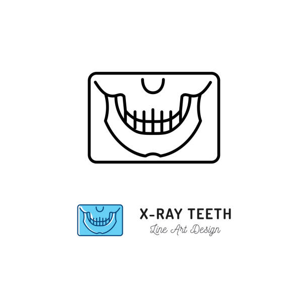 X-ray teeth icon, Panoramic radiograph x-ray jaw sign. Dental Care clinic , Stomatology office . Thin line art symbol, Vector illustration X-ray teeth icon, Panoramic radiograph x-ray jaw sign. Dental Care clinic , Stomatology office . Thin line art symbol, Vector flat illustration human jaw bone stock illustrations
