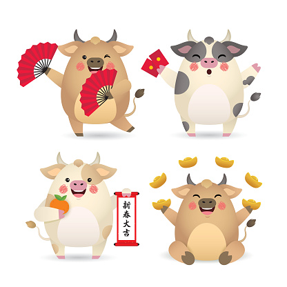 2021 year of the Ox : cartoon cow holding hand fan, red packets, chinese scroll & gold ingot