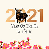 Greeting for the Chinese New Year of the Ox 2021 with paper art ox and gold colored 2021 on plum blossom tree background, the Chinese phrase means Year of the Ox according to lunar calendar