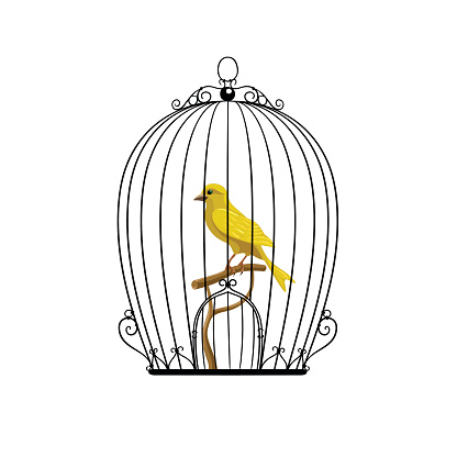 yellow bird in a black cage