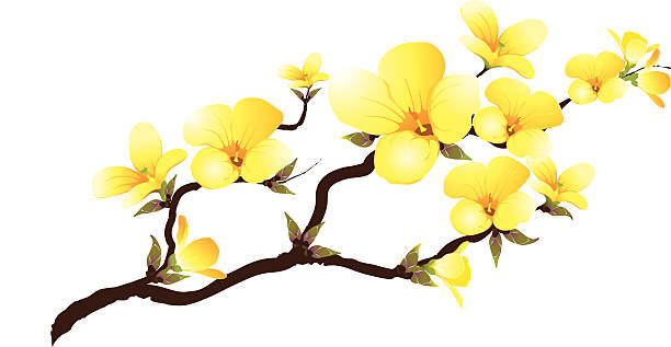 Yellow branch abloom vector art illustration