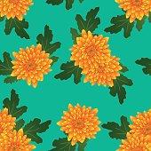 Yellow Chrysanthemum on Green Teal Background. Vector Illustration.