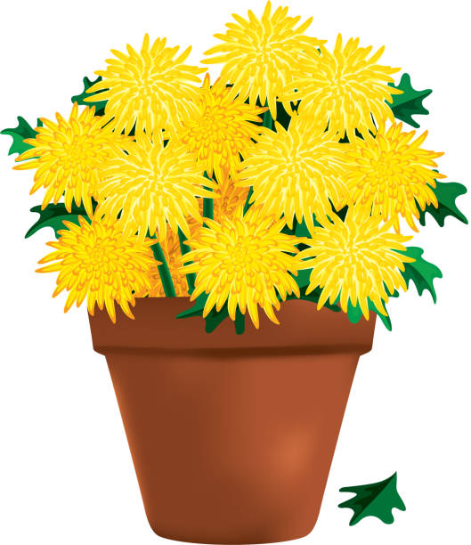 Yellow Chrysanthemums in a Clay Pot vector art illustration