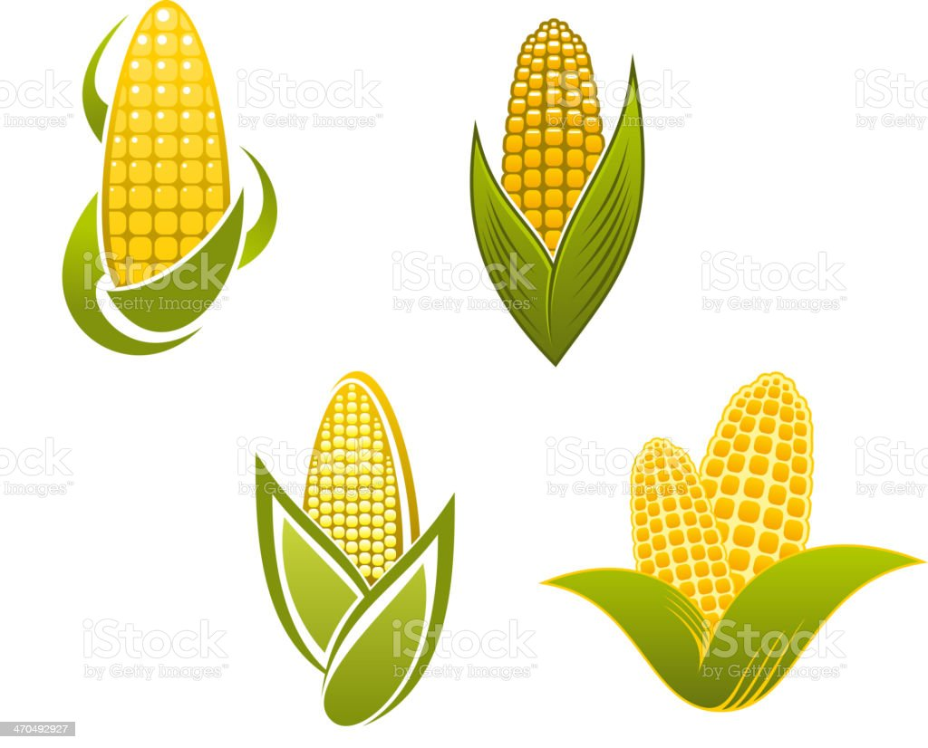 Yellow corn icons and symbols vector art illustration
