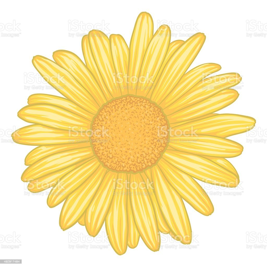 Yellow Daisy Flower With Effect Watercolor Isolated On White Stock