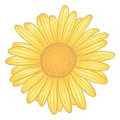 beautiful yellow daisy flower with effect watercolor isolated on white background. for greeting card and invitation of the wedding, birthday, Valentine's Day, mother's day and other seasonal holidays