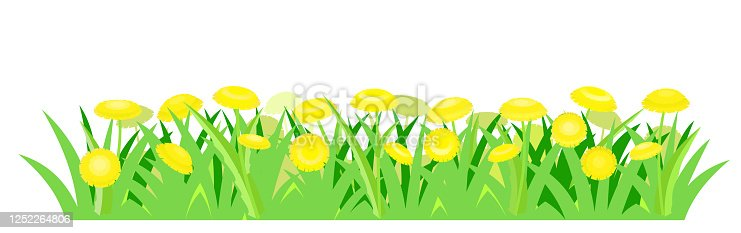 Yellow dandelions. Isolated vector illustration. Wild meadow flowers. Cartoon style. Background image.