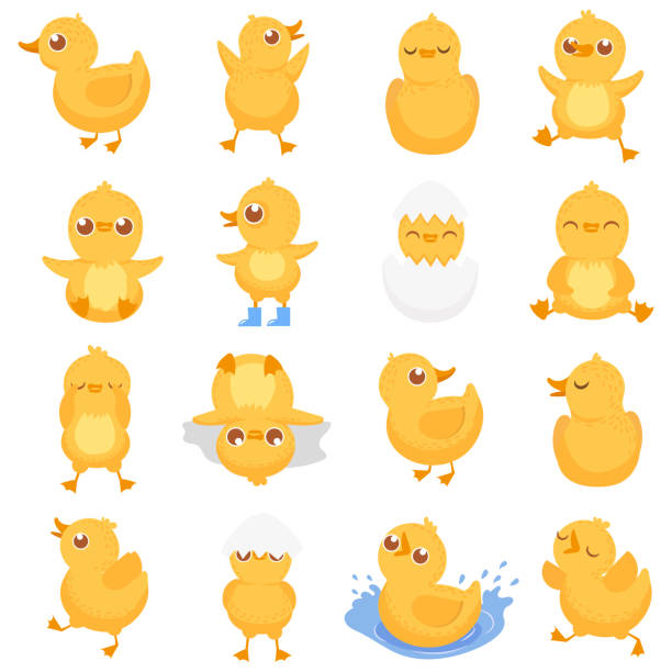 Yellow duckling. Cute duck chick, little ducks and ducky baby isolated cartoon vector illustration Yellow duckling. Cute duck chick, little ducks and ducky baby. Newborn duck, egg hatching chicks or gosling farm duckling character different emotion. Isolated cartoon vector illustration icons set duckling stock illustrations