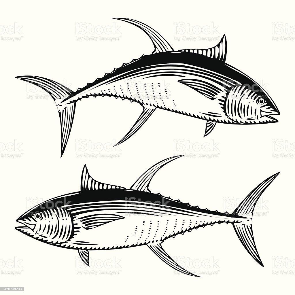 Yellow Fin Tuna vector art illustration