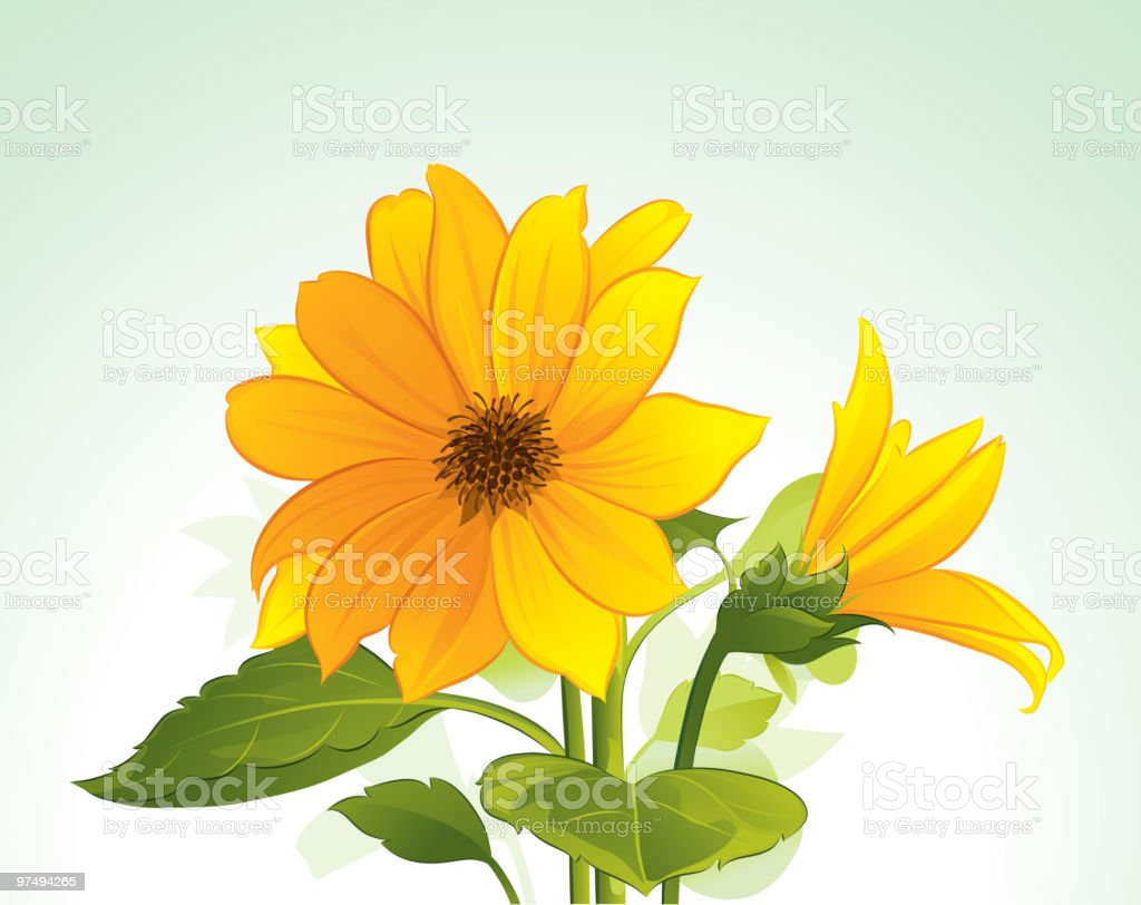 Yellow flower in bloom royalty-free yellow flower in bloom stock vector art & more images of backgrounds