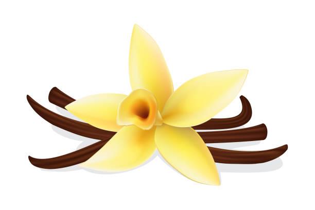 stockillustraties, clipart, cartoons en iconen met gele bloem van vanille en stokken - vanille