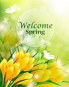 Yellow Spring Crocus