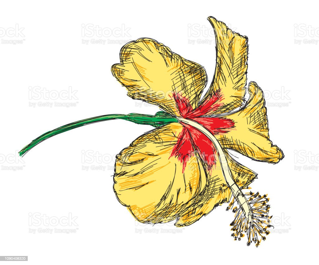 Yellow Hibiscus Detailed Vector Illustration Hand Drawn Stock Vector
