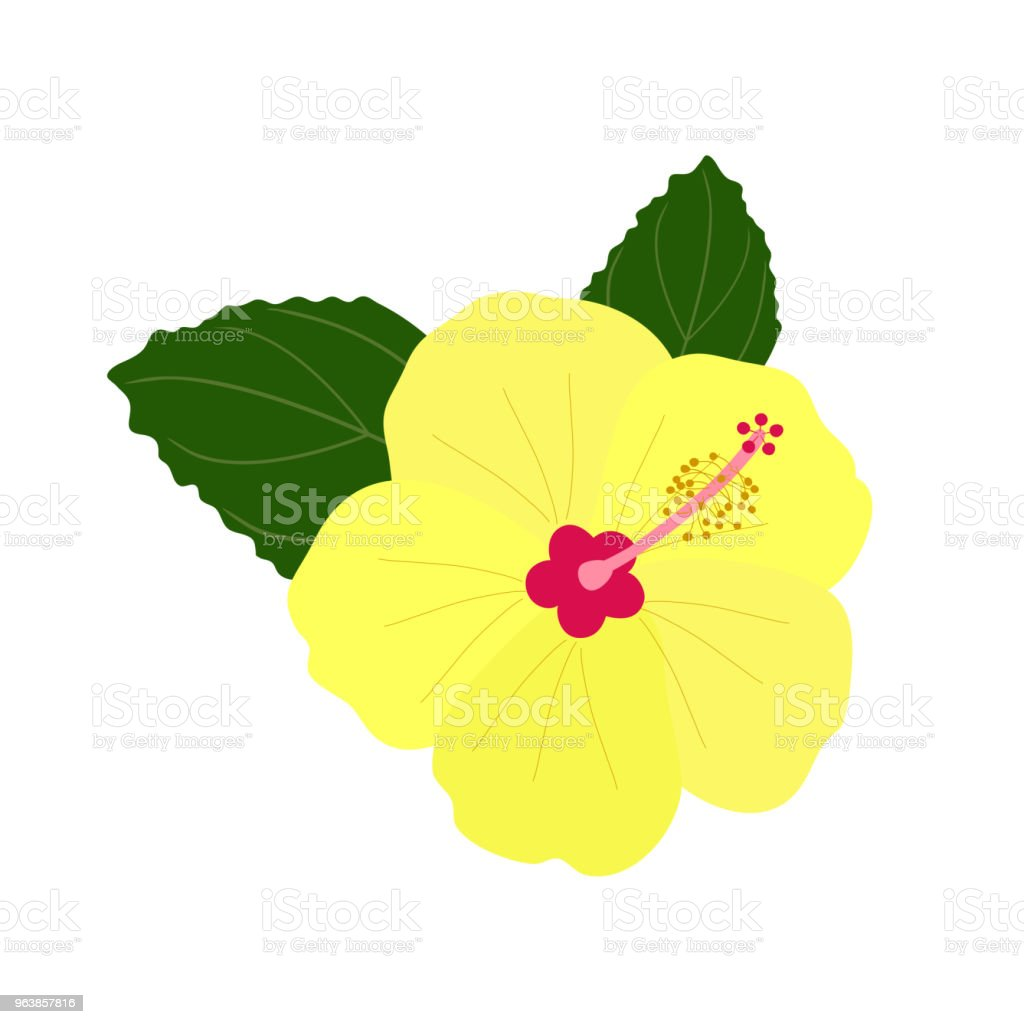 Yellow hibiscus flower. Tropical plant isolated on white background. Vector illustration. - Royalty-free Blossom stock vector