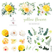 Yellow hydrangea, mustard rose, peony, white iris, orchid, spring garden flowers, eucalyptus, greenery, fern,vector design big set.Wedding summer bouquet collection. Elements are isolated and editable