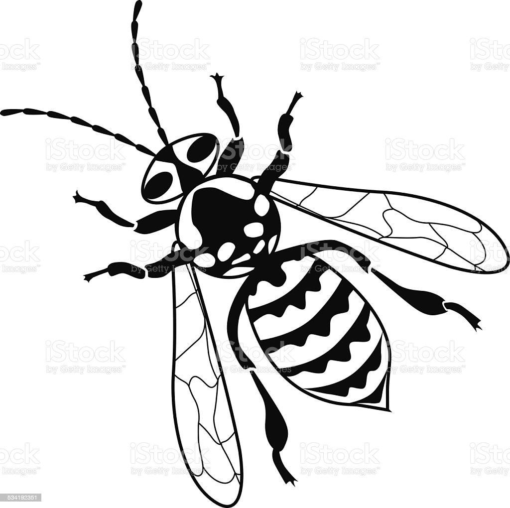 yellow jacket bee vector illustration in black and white stock rh istockphoto com GT Yellow Jacket Clip Art Yellow Jacket Cartoon