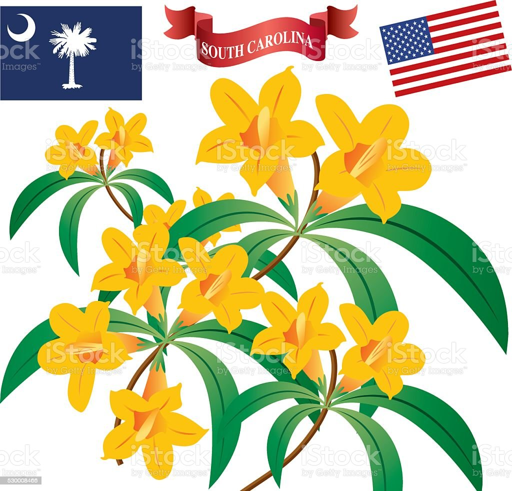 Yellow Jessamine Stock Vector Art More Images Of Flower 530008466