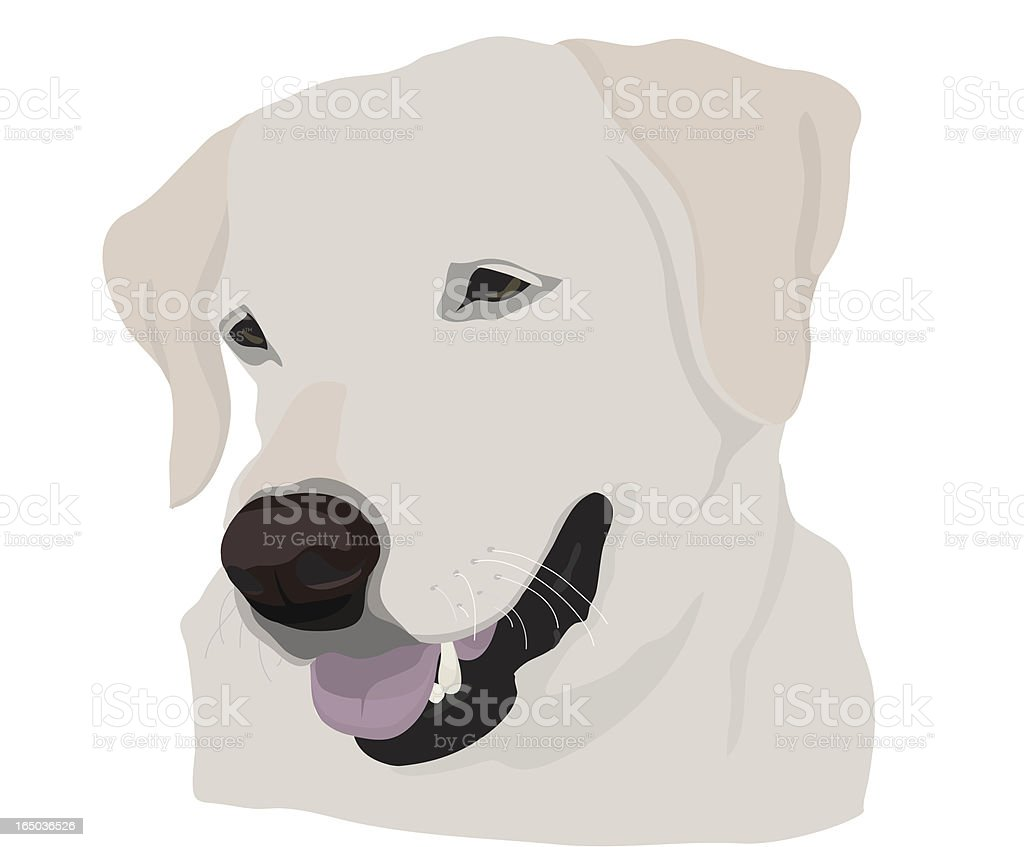 Yellow Lab royalty-free yellow lab stock vector art & more images of animal