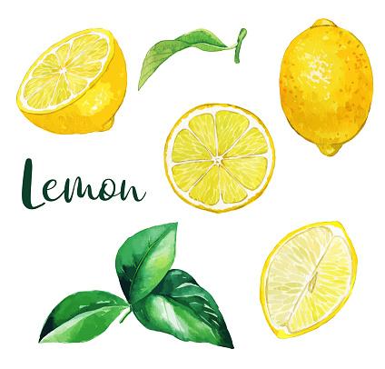 Yellow lemon fruits and leaves, watercolor fruit