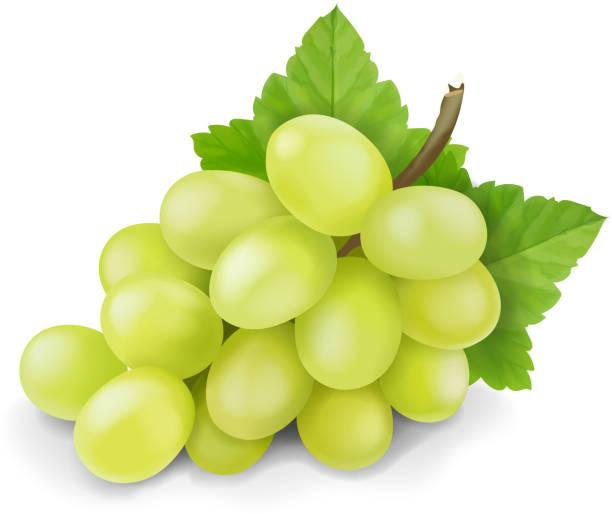 葉を単離した黄色または緑色のブドウの枝。ブドウのアイコン。現実的なベクトル。 - マスカット イラスト点のイラスト素材/クリップアート素材/マンガ素材/アイコン素材