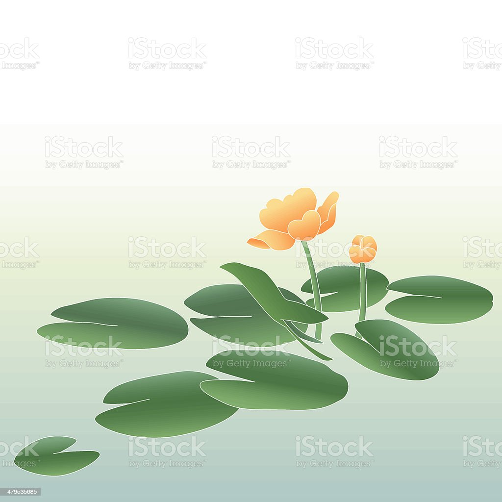Yellow pond lily (vector) royalty-free stock vector art