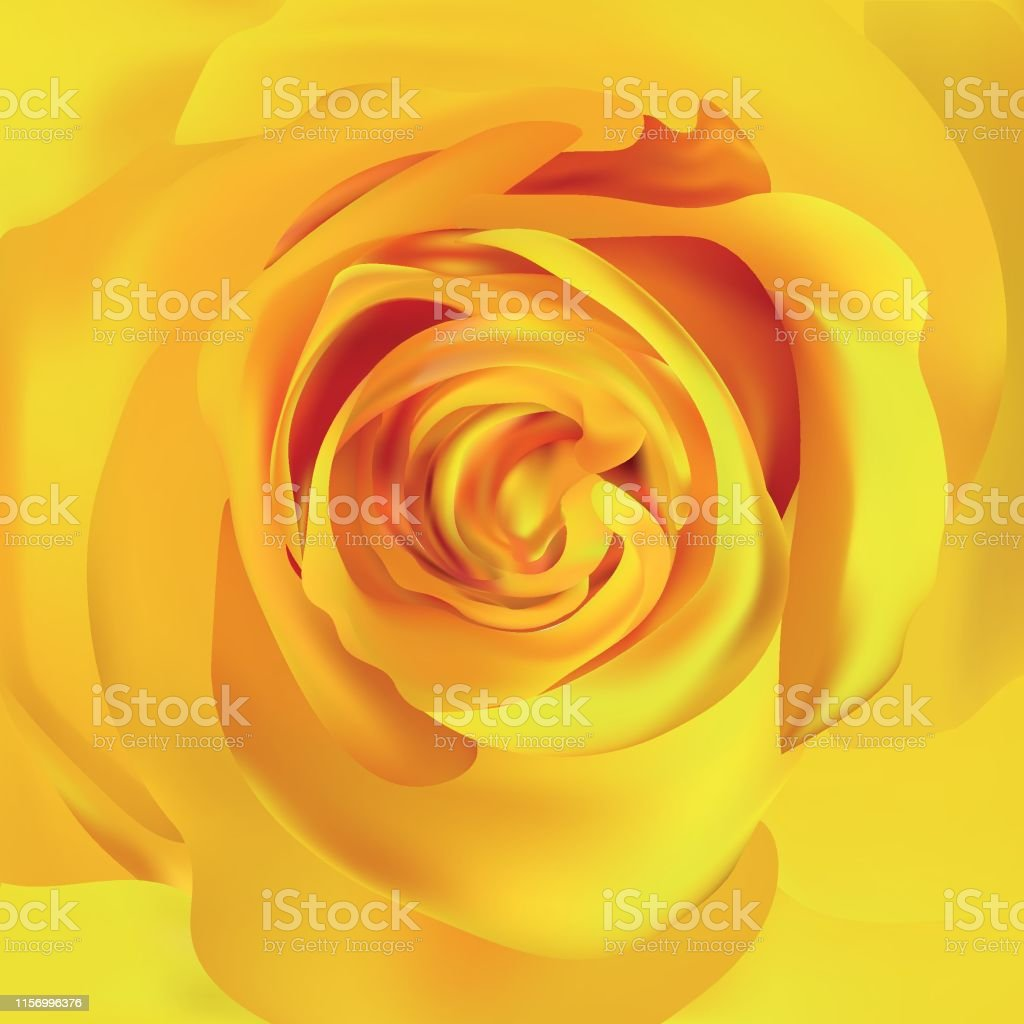 Yellow rose close up. 3d realistic rose. Beautiful rose. Vector...
