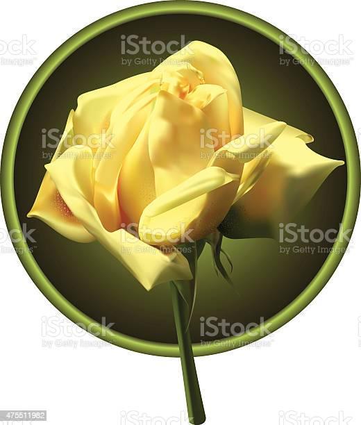 Yellow rose vector id475511982?b=1&k=6&m=475511982&s=612x612&h=sztpwd4v4wtf0bmwfldwqvzcrebfeaycdp 40q1snbm=