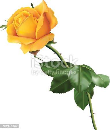 istock Yellow rose 532409548