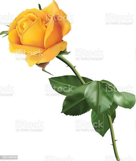 Yellow rose vector id532409548?b=1&k=6&m=532409548&s=612x612&h=frtioej5 h9rbtzval1adjdvgoxfnkypf3uh0ll7izy=