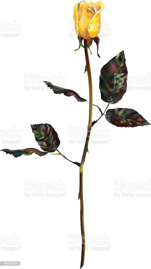 Yellow Rose royalty-free stock vector art