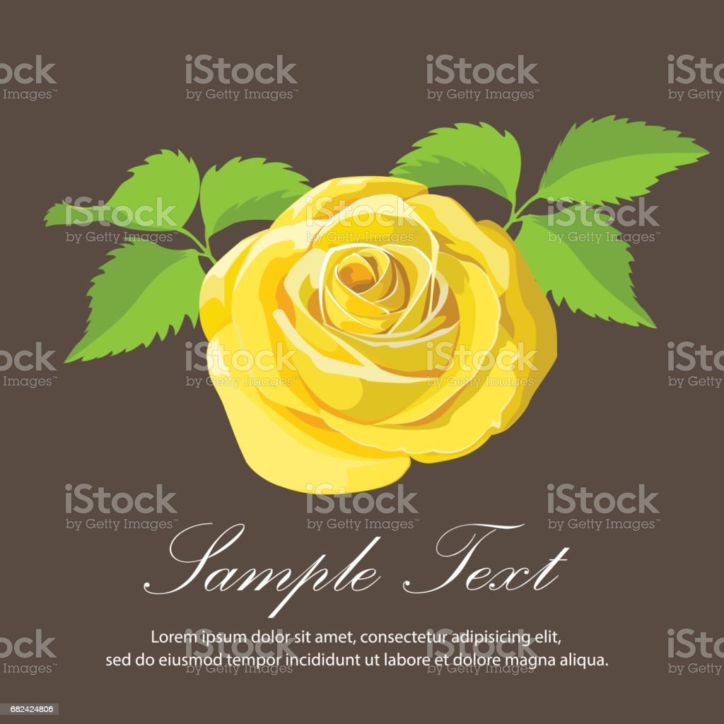 yellow rose . Vector illustration. royalty-free yellow rose vector illustration stock vector art & more images of anniversary