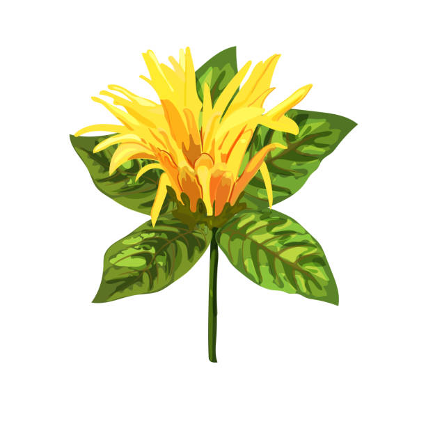 Yellow tropical plant. Mexican Honeysuckle, Orange Plume flower. Yellow tropical plant. Mexican Honeysuckle, Orange Plume flower. Collection with hand drawn flowers and leaves. Design for invitation, wedding or greeting cards. Vector illustration. honeysuckle stock illustrations