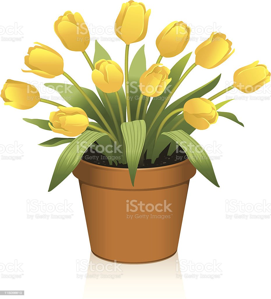 Yellow tulips royalty-free stock vector art