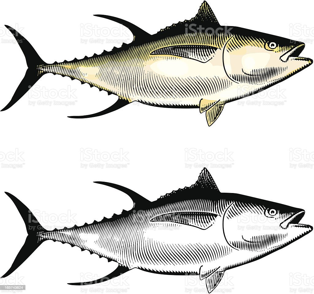 Yellowfin Tuna royalty-free yellowfin tuna stock vector art & more images of albacore tuna